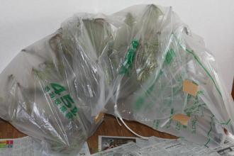 苔梅・苔松の梱包