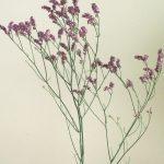 自分が使った花材事典:スーパーレディパープル