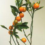 自分が使った花材事典:金柑