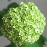 自分が使った花材事典:ビバーナム
