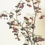 自分が使った花材事典:ブラックベリー