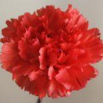 自分が使った花材事典:カーネーション(オレンジ 切込弁)