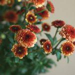 自分が使った花材事典:豆菊(スプレー菊:茶)