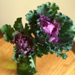 自分が使った花材事典:葉ボタン(フリル葉)