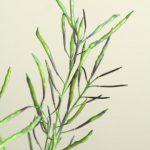 自分が使った花材事典:葉牡丹の実