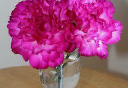 自分が使った花材事典:カーネーション(濃ピンク)