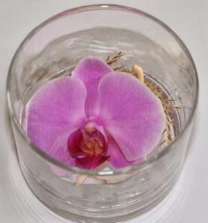 植物をハイターで漂白する実験