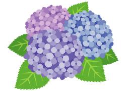 素人さん向け:すごく簡単で、安易な気持ちでできる花留め法
