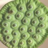 自分が使った花材事典:ハスの実