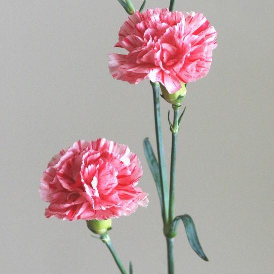 カーネーション(赤・ピンク絞り)