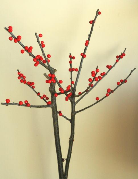 ウィンターベリー 切り花