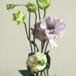 自分が使った花材事典:トルコキキョウ(薄紫)