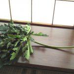 自分が使った花材事典:パパイヤの葉