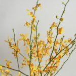 自分が使った花材事典:レナンセラ