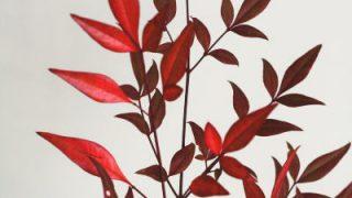 自分が使った花材事典:南天(紅葉)