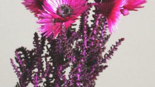 自分が使った花材事典:ヘリクリサム