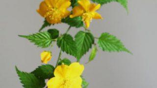 自分が使った花材事典:山吹