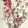 自分が使った花材事典:ハナミズキ(赤)