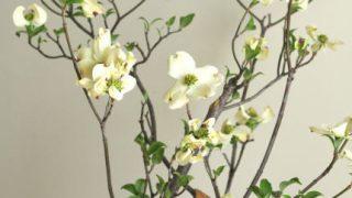 自分が使った花材事典:ハナミズキ