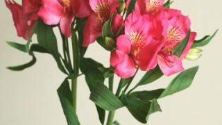 自分が使った花材事典:アルストロメリア(濃ピンク)