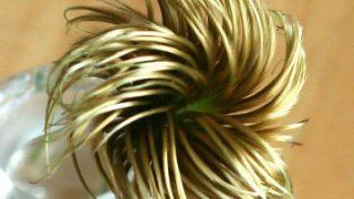 自分が使った花材事典:鉄線の実