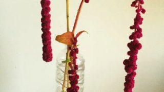 自分が使った花材事典:アマランサス