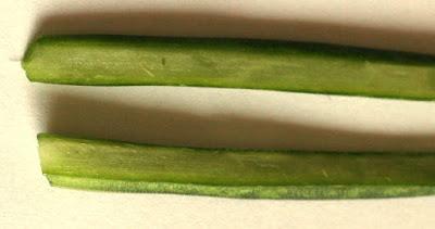 スタッキーの断面 植物自由研究