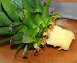パイナップル 挿し木