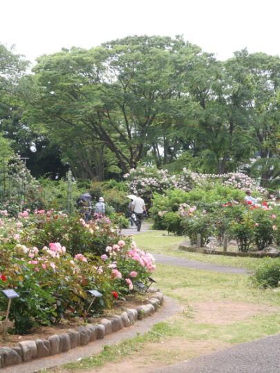 神奈川県立フラワーセンター大船植物園 ばら園