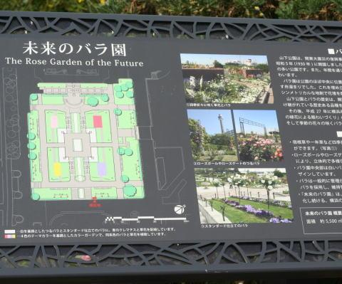山下公園のバラ園(未来のバラ園)